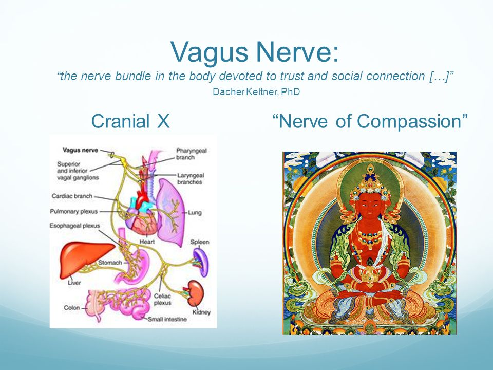Vagal Nerve Stimulation Through Kundalini Yoga Ppt Video Online